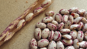 Cranberry-Beans, Pinto-Beans
