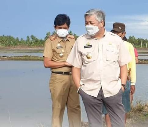 Bupati Pinrang Pantau Pengendalian Hama Tikus di Mattiro Bulu