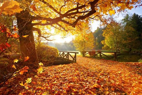 Cozy Fall Wallpaper Weird Words For Autumn Time Merriam Webster