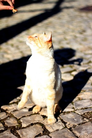 Algarve---50mm--cat