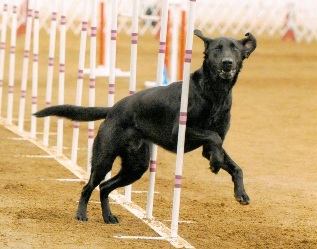 About Us Merrimac Dog Training Club