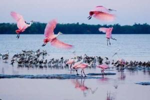BirdFestImage