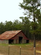 faded red barn sits in the edge of a pine forest