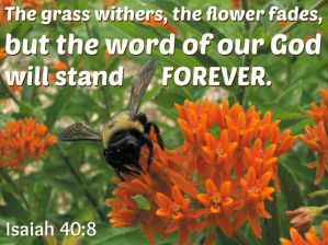 SCRIPTURE -- Isaiah 40:8 written on photo of bumble bee on milkweed blooms