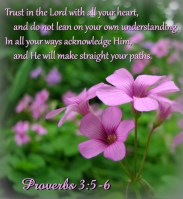 Scripture--Proverbs 3:5-6 written on a photo of pink wildflowers