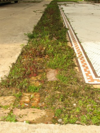 small weeds sprouting between a concrete slab and detailed tile floor