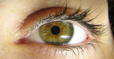 close up photo of a green and brown eye with long black eyelashes