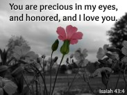 Scripture--Isaiah 43:4 written on black-and-white photo with one pink flower in color