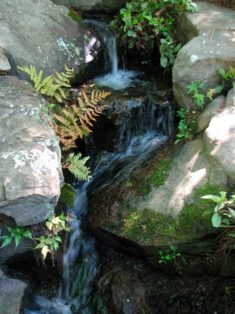 small waterfall and ferns