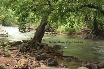 the stream by the tree by the stream