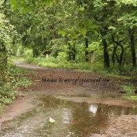 borivali national park, mumbai: the urban jungle
