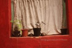 grill-less, plant-full windowsill