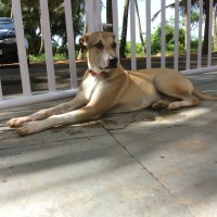a goan holiday with the traveling dog inji