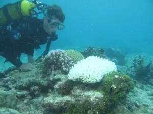 plongeur près des coraux