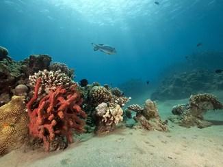 corail et fonds marins