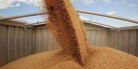 سيكون حصاد الحبوب رقما قياسيا 74 مليون طن ، – ميلوفانوف