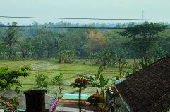 rice fields, taken from the bus parking area