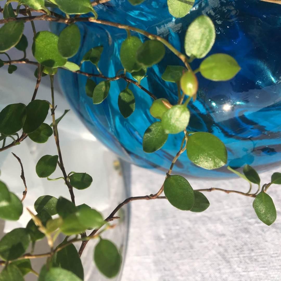 vase corolle verre bleu ancien
