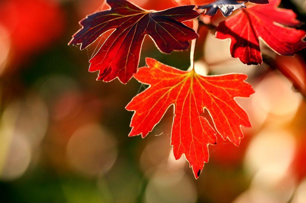 Tout un feu de couleurs flambloyantes , c ' est Monsieur l ' automne !