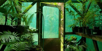 Audubon: A Palm Tree Paradise in Maui