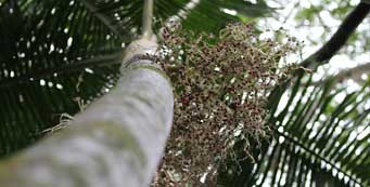 The Merwin Palm Collection