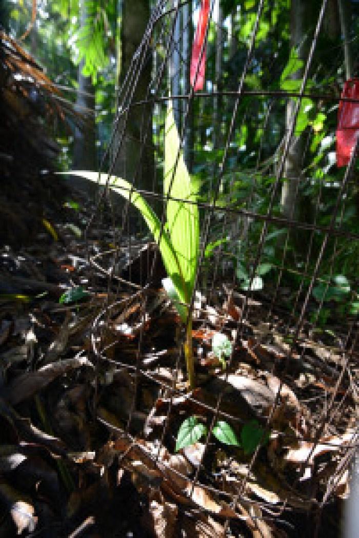 matt thayer merwin baby coconut 10-15-14