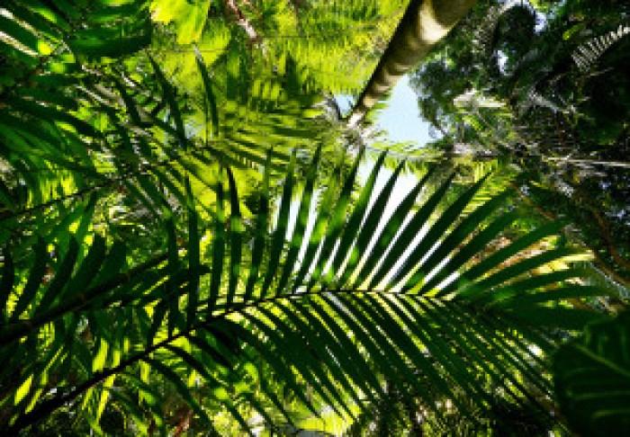 matt thayer merwin palms 10-15-14