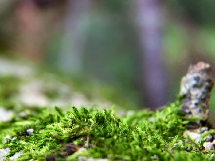 Moss By Chris Sorge