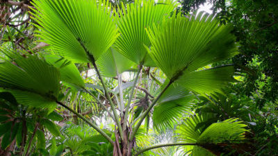 Search the Merwin Palm Collection