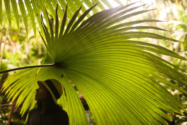 A student under a fan palm in the Merwin Palm Forest