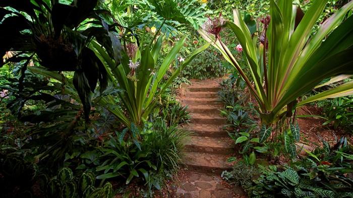 Garden Steps - Larry Cameron