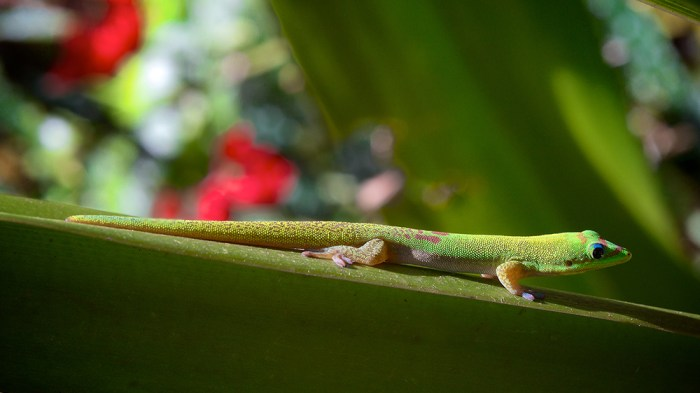 Green Lizard by Larry Cameron