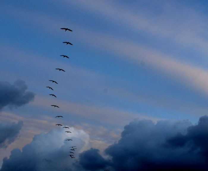 Migrating Cranes by Joe Wolf (Flickr)