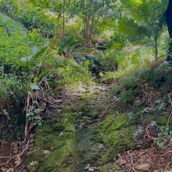 Waterfall on Merwin Property - Sara Tekula