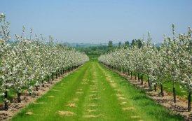 """Peste 4300 de pomi fructiferi, distribuiţi în judeţ prin programul """"Un copac pentru generaţia viitoare"""