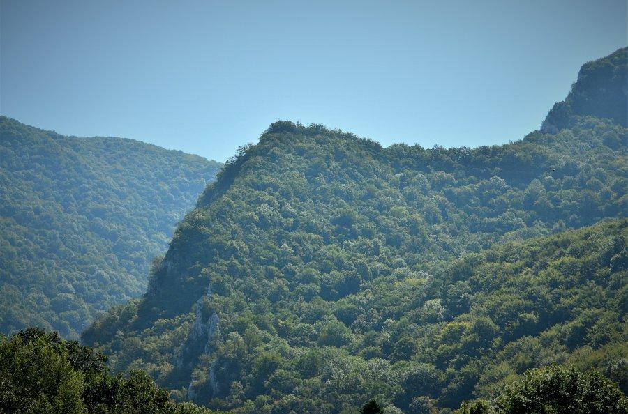 O nouă șansă pentru recuperarea în patrimoniul statului a celor 43.227 hectare de pădure din județul Bacău retrocedate ilegal