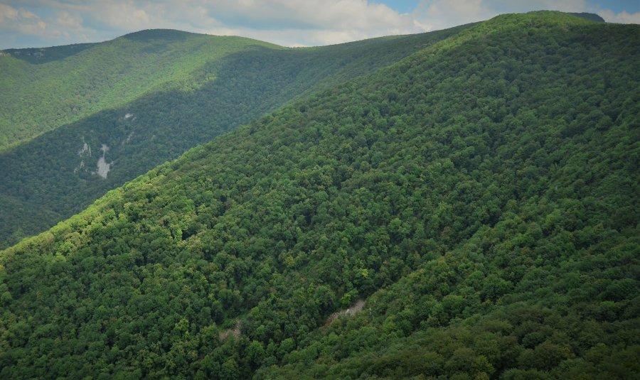 Peste 43.000 hectare de pădure retrocedate ilegal ar putea fi readuse în patrimoniul statului și în administrarea Romsilva