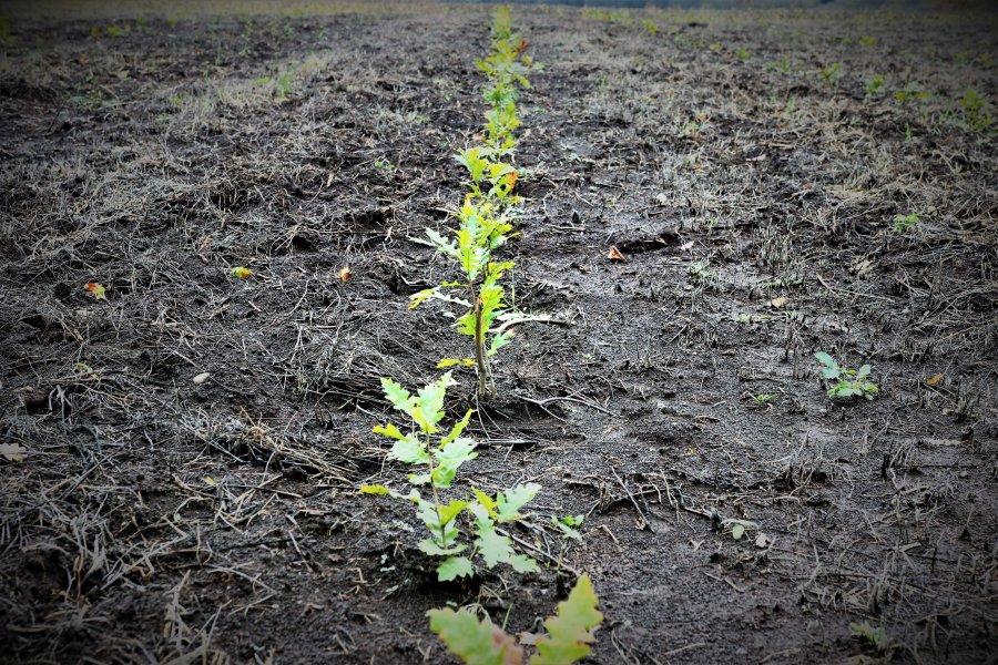 Romsilva a marcat debutul Lunii Plantării Arborilor prin acțiuni de împădurire la nivelul direcțiilor silvice