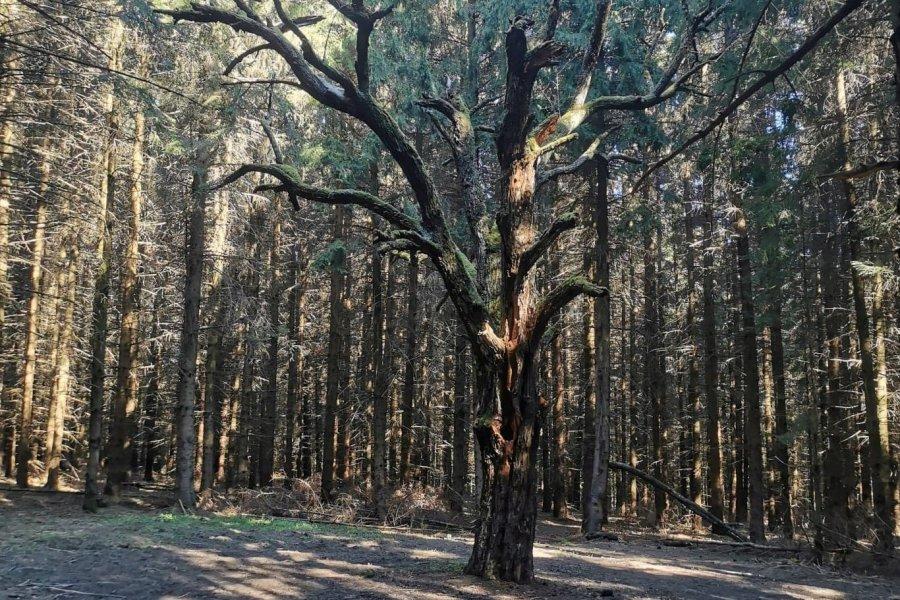 Să circulăm cu grijă în pădurile din apropiere!