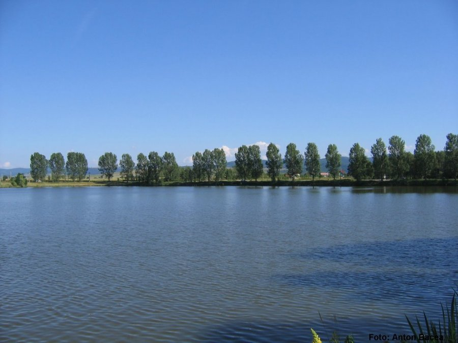 Insule plutitoare pentru protejarea biodiversităţii, amplasate în mai multe lacuri din judeţ