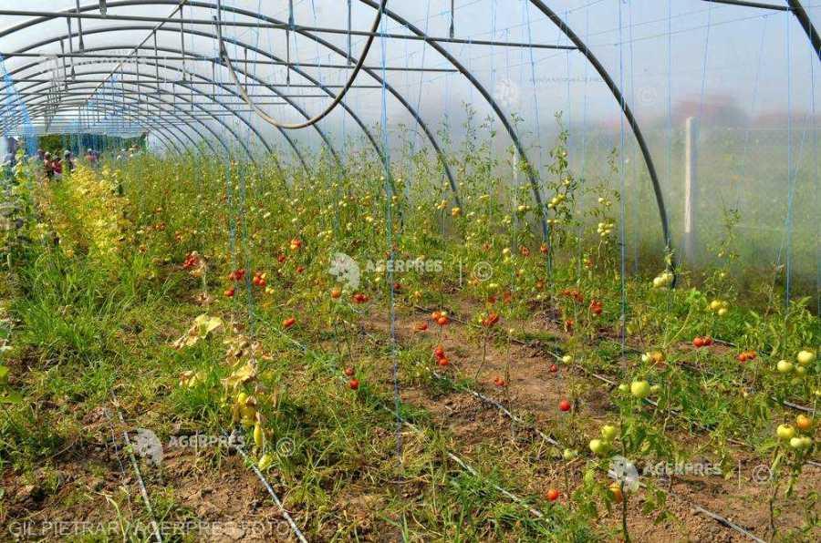 APIA: Cererile de înscriere în programul pentru susţinerea producţiei de legume în spaţii protejate pot fi depuse până pe 20 iulie