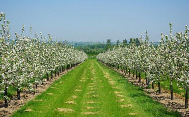 """Aproape 30.000 de pomi fructiferi, distribuiţi prin programul """"Un copac pentru generaţia viitoare"""