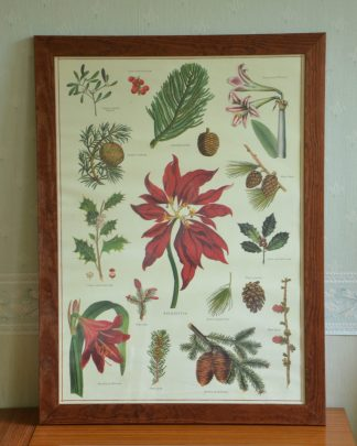 Affiche de fleurs de Noël, poinsetta, amaryllis. Imprimé en Corée sur du papier italien,