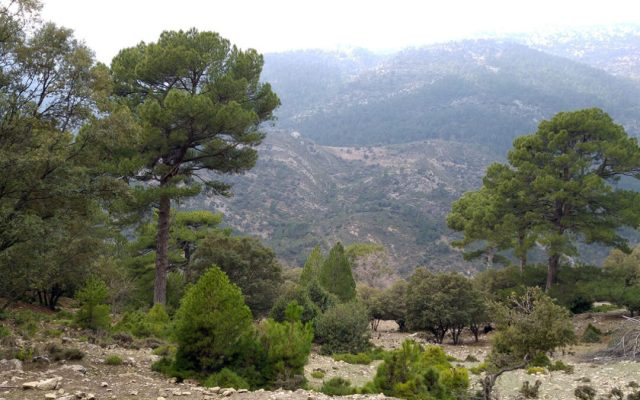 Acuerdos de la Plataforma por el Monte Andaluz