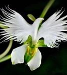L'orchidée, symbole de bien-être