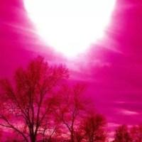 Longévité avec la vie en rose