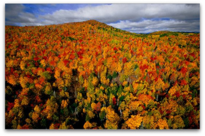 foret-canada
