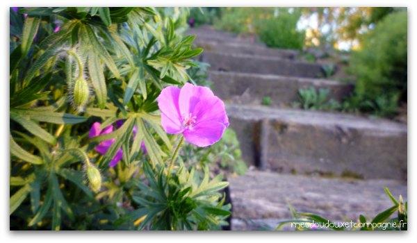 fleur-escalier