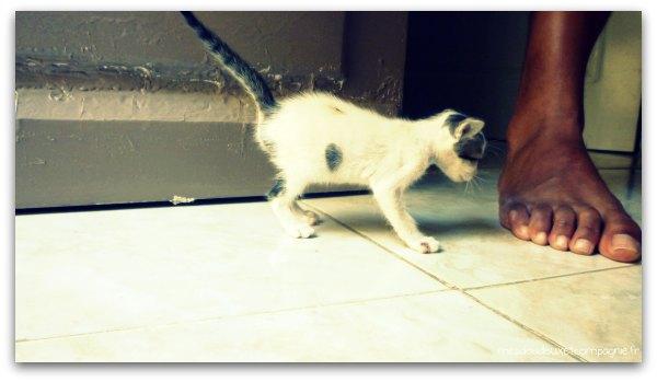 chaton-tunisie
