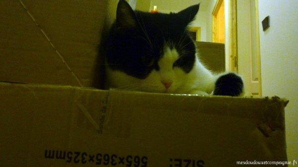 chat-sur-carton-demenagement